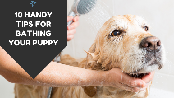 10 Handy Tips for Bathing Your Puppy