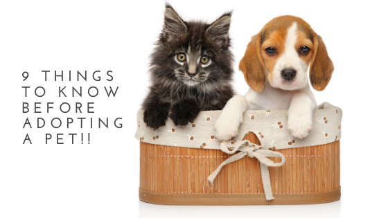 9 Things To Know Before Adopting A Pet!