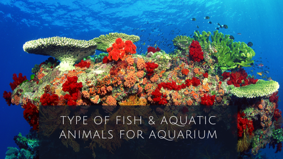Type of Fish & Aquatic animals for Aquarium