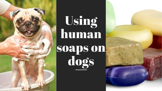 Using human soaps on dogs